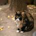 猫比狗更容易感染新冠病毒吗?