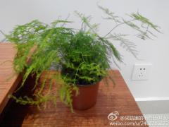 这种草叫什么名字,1……