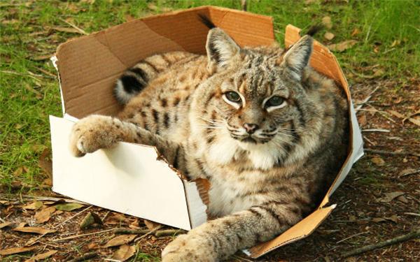 """芬克在电子邮件中写道:""""猫应对环境改变和压力因素时的行为策略就是图片"""