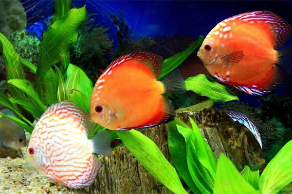 为什么鱼是睁着眼睛睡觉的?