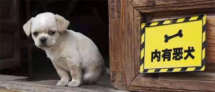 狗和猫都会吃自己的主人吗?