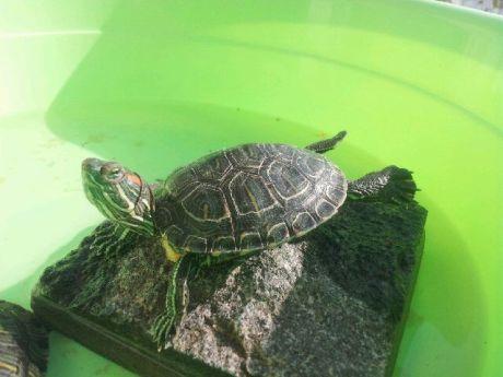 家里养乌龟的亲能不能告诉我,冬天应该怎么养乌龟?