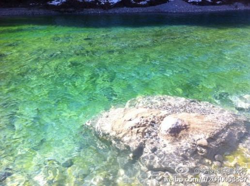 水藻结构解刨