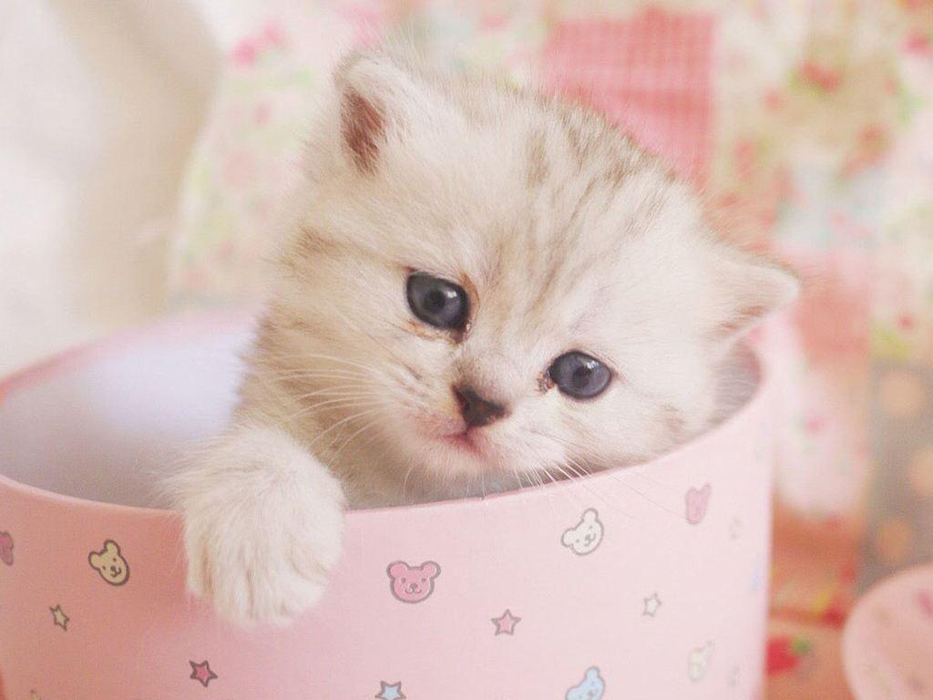 千万别给小猫喂牛奶羊奶也不行