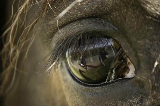 马的眼睛怎么画?