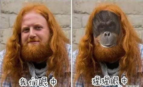 大猩猩发情袭人