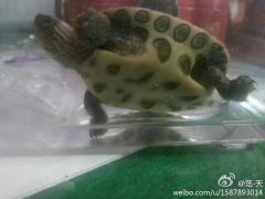 北京哪里有能治疗乌龟……