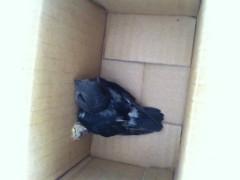 我捡到一只幼鸟全身黑……