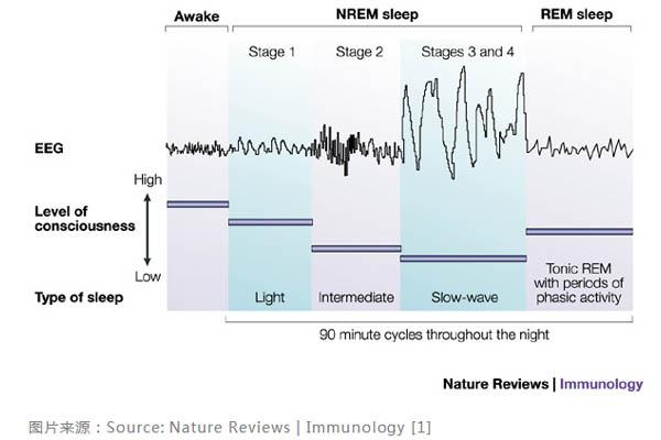 睡觉时的脑电波