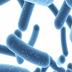 """为什么说益生菌对人体是""""好""""的?"""