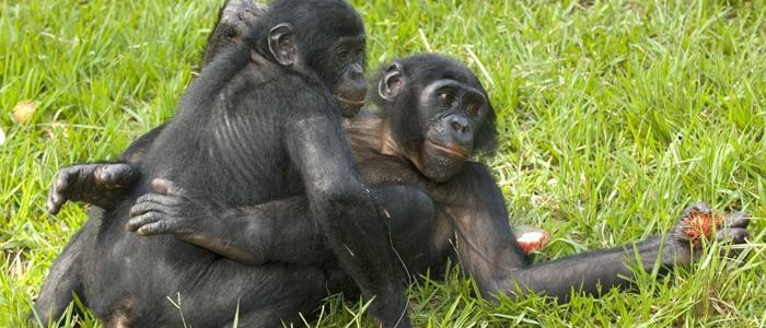 人与动物做爱1715ia{0_动物的交配都是为了繁殖吗?交朋友避冲突也要靠它_日报_爱问