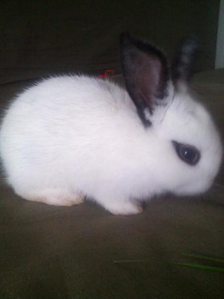 【关于兔子的名字】应该给小兔子起个好听的名字,叫好