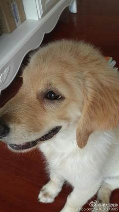 有没有人知道小狗眼睛……