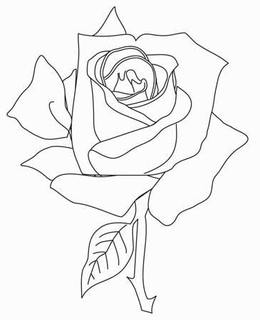 大玫瑰花简笔画
