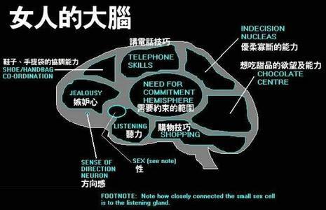女人的大脑