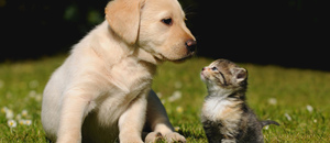 主人死后,猫会吃尸体狗则不会?