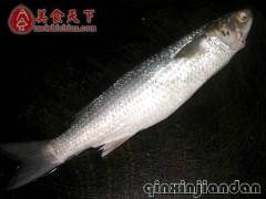 这种鱼学名叫什么~漳……