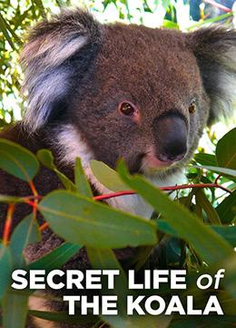 考拉的秘密生活 第一季