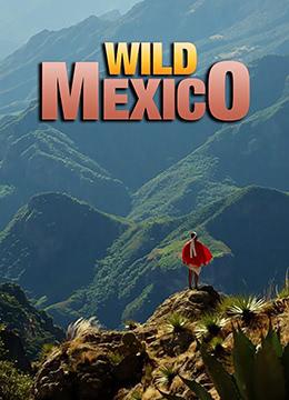 野性墨西哥