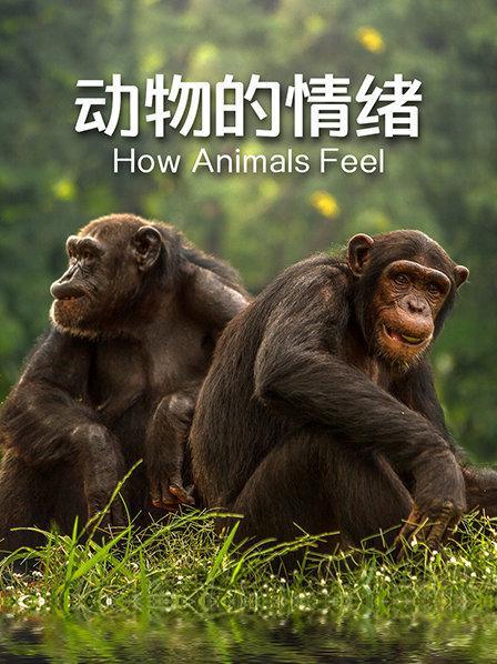 动物的情绪
